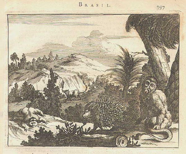 22.48 Prints - Brasil- Rare World Prints and Pictures for Sale